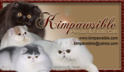 Kimpawsible Persians & Exotics