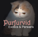 Purfurvid Exotic & Persian Cats